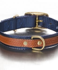 cooper-blue-leather-collar-back