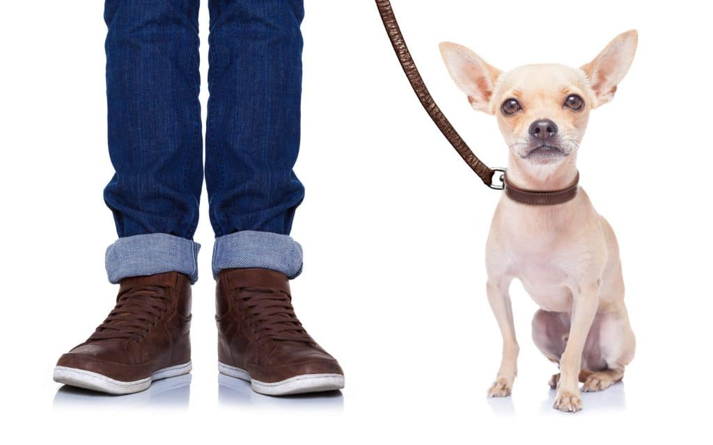 leather dog collars and leashes
