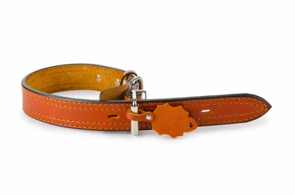 maintaining quality leather dog collars